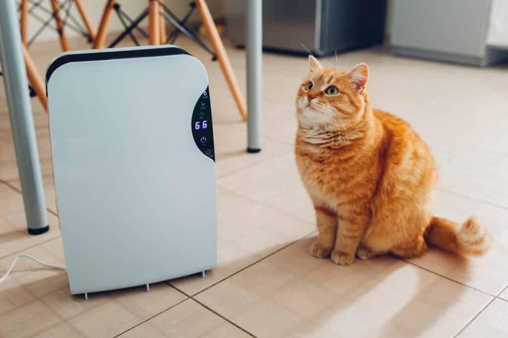 Deshumidificateur d'interieur avec un chat